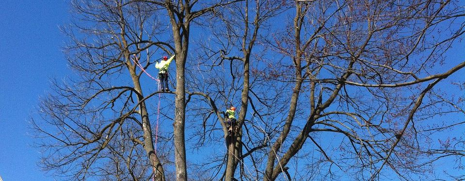 Tree Removal, Simcoe & Muskoka County