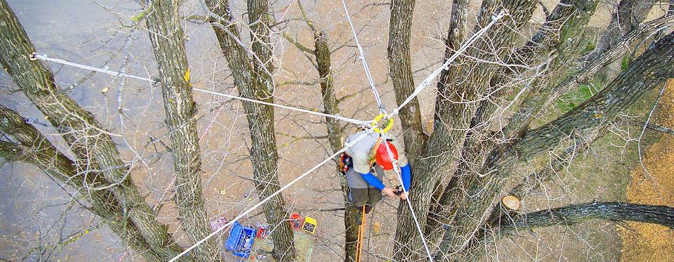 Tree Pruning, Innisfil, ON